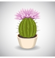 Cactus with beautiful pink flowers vector image