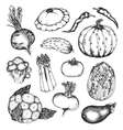Organic natural vegetables set vector image