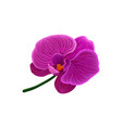beautiful purple orchid flower vector image