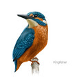 Kingfisher hand drawn vector image