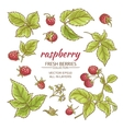 raspberry set vector image