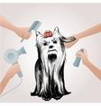 Beauty Pets Salon Concept vector image vector image