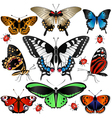 Butterflies set small vector image vector image