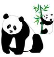 Set of cute panda bears with bamboo vector image