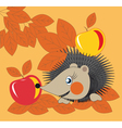 hedgehog and apples vector image