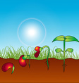 growing plant vector image