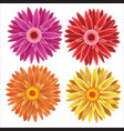 gerbera - set of different colors flowers vector image