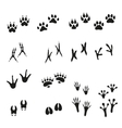Tracks of wild animals and birds Paw print vector image