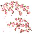 Sakura blossom Japanese cherry tree isolated vector image