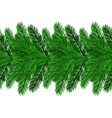 Fir Green Branches vector image