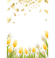 Tulip spring flowers vector image vector image