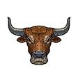 Bull head isolated vector image