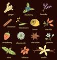 natural ingredients vector image