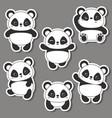 panda bear of vector image