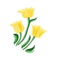 Yellow tulips set vector image
