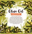 green olive branch poster for oil label design vector image