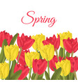 spring text with red tulips flower bouquet vector image