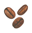 watercolor with coffee beans vector image