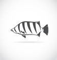 image of an Siamese tiger fish vector image