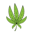 cannabis green leaf vector image