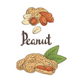 Peanuts kernels and leaves vector image