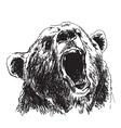 Hand sketch head bear vector image