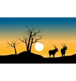 Silhouette of dry tree and antelope vector image
