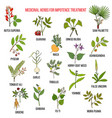 best herbs for impotence treatment vector image