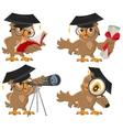 Set owl vector image