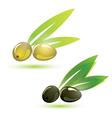 olives natural vector image