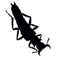 Bug silhouette vector image vector image