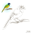 Inca jay bird learn to draw vector image