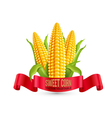 corn Three ear of corn with leaves and red ribbon vector image