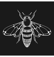 Hand drawn engraving Sketch of Bee for tattoo vector image