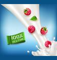 ripe red raspberry falling into the milk milk vector image