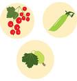 set berries vector image