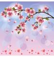 Spring background with sakura blossom Japanese vector image