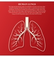 Human Lung anatomy vector image
