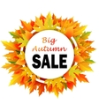 Autumn discount fall leaves vector image