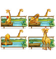 Giraffes in the wooden frames vector image