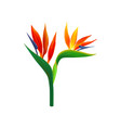 bird of paradise flowers vector image
