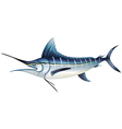 Atlantic blue marlin vector image