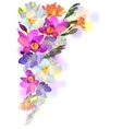 Spring card with gentle freesia flowers vector image