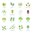 leafy vegetables flat icons set vector image