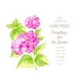 The Hortensia flower vector image vector image