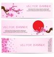 Spring Banner with Blooming Sakura vector image