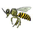 sketch of bee vector image