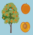 apricot fruit and tree vector image vector image