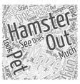 Hamster mazes Word Cloud Concept vector image