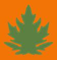 Green papaya leaf on orange background vector image vector image